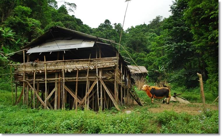 Construcción de una plataforma de madera y bambú, futuro centro de tertulias, o casa consistorial y escenario de sacrificios rituales o bien oraciones a los dioses
