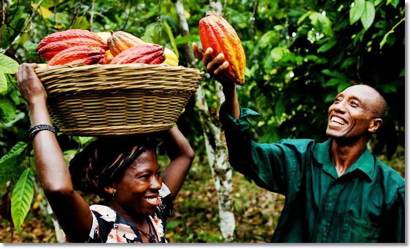 Las agricultura es el mayor de los recursos que dispone la sociedad ashanti