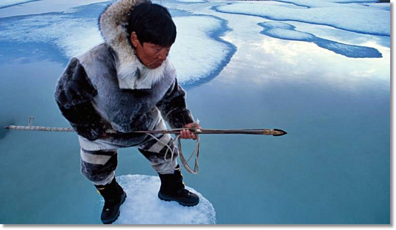 Las condiciones ambientales y los peligros asumidos para cazar focas han sido siempre muy grandes por los esquimales, jugándose en muchas ocasiones la vida literalmente.