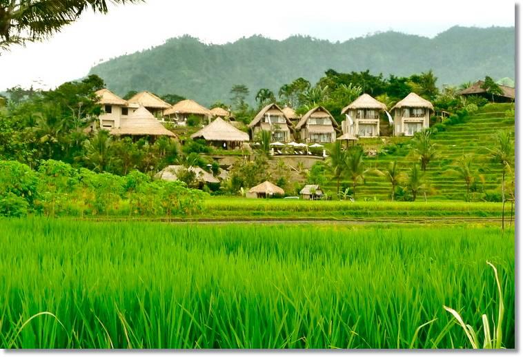 Poblado ashanti situado frente a una plantación de arroz