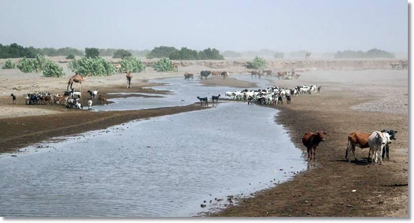 El Awash, único río de relevancia que penetra en el desierto de Danakil, se pierde como otros ubicados más al norte en una serie de lagos y no llega al mar