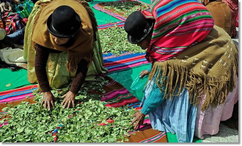 Mujeres aimaras seleccionando y vendiendo hojas de coca - etnias.net