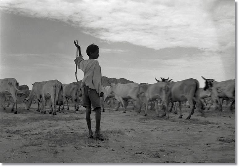 Para los baggaras, la educación de un pequeño no se halla en los libros, sino más bien en el trabajo del campo y la ganadería - etnias.net