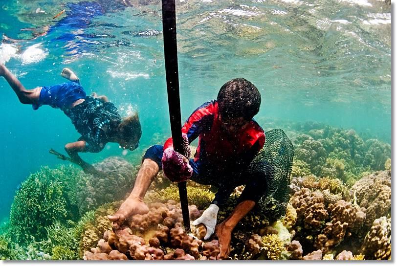 El mar ha sido siempre y en todo momento el centro vital de la civilización de los bayau, - etnias.net