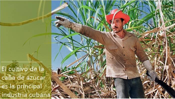 Cultivando caña de azúcar en Cuba